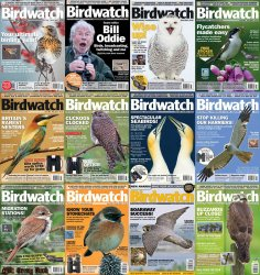 BirdWatch - Full Year Collection (2014)